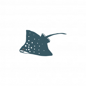 A creepy looking stingray that looks oddly playful and friendly.